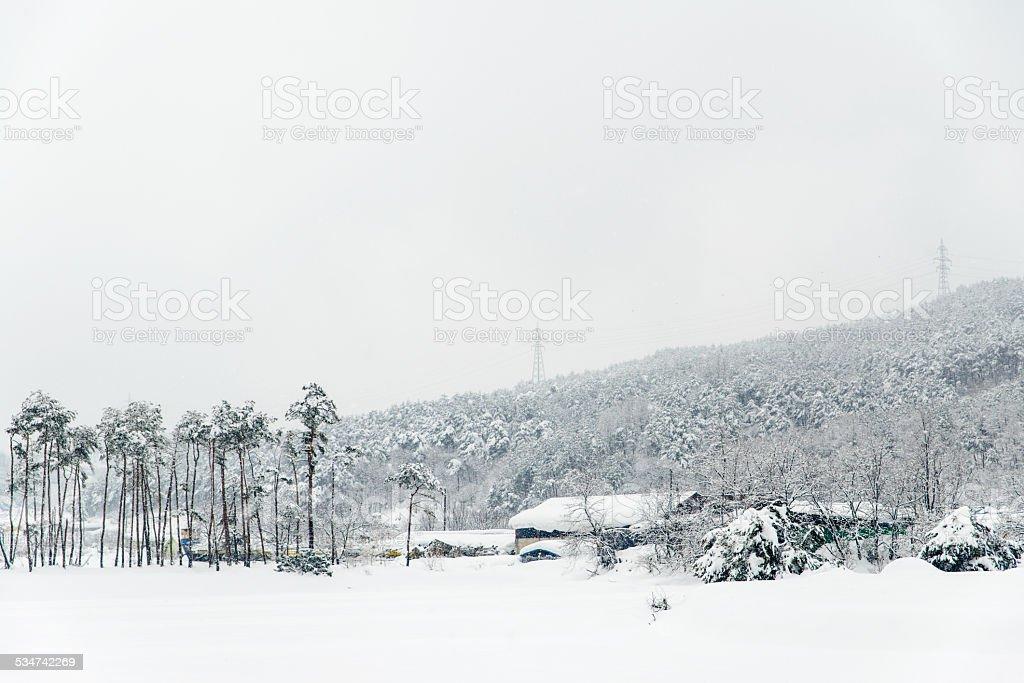 Zima Scena zbiór zdjęć royalty-free