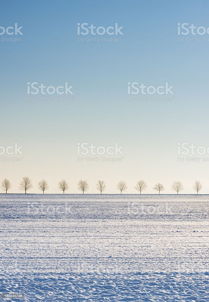 Winter scene snow covered field, row of trees, blue sky royalty-free stock photo