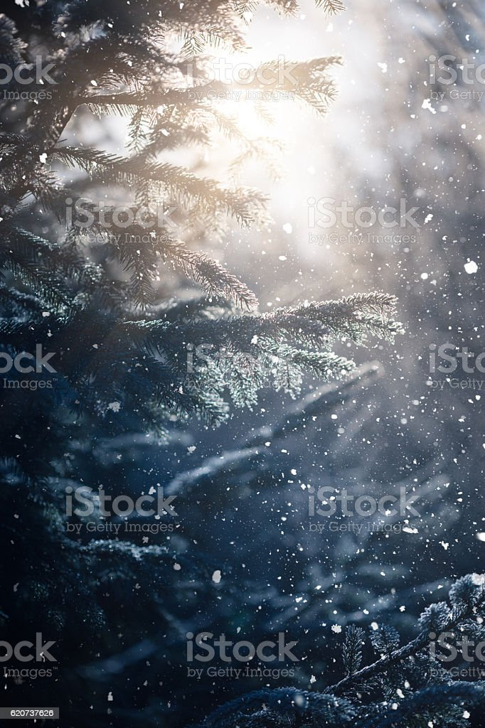 Winter scene - snowfall in the woods stock photo