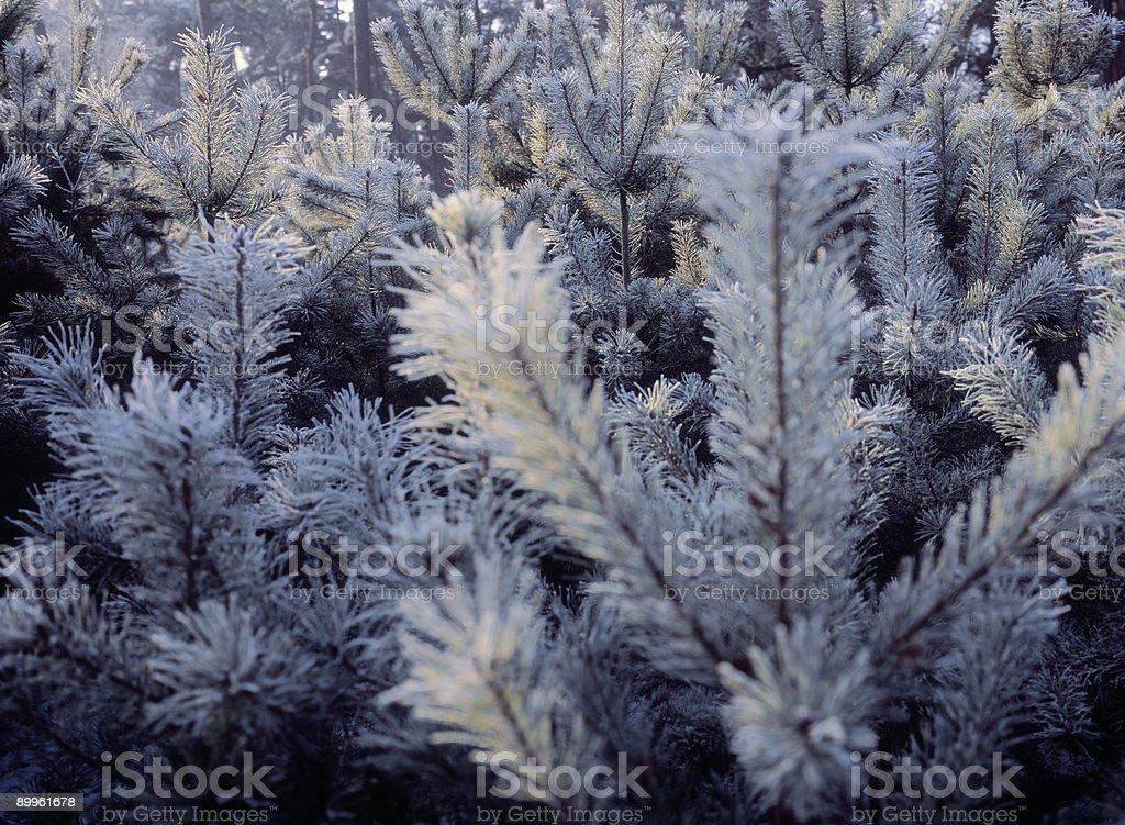 Winter scene, The Netherlands. stock photo