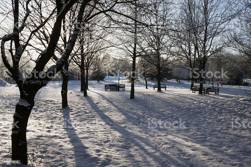 Winter Scene - Trees and Park Benches royalty-free stock photo