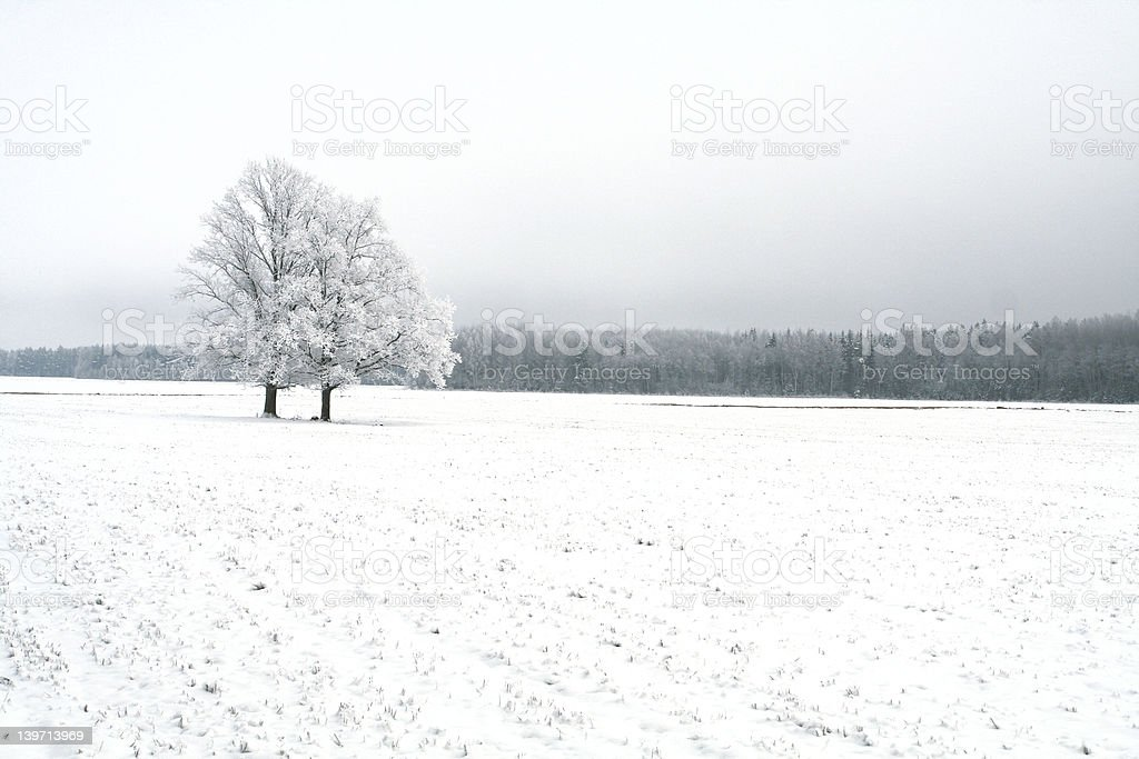 Winter scene  with Lonely Tree royalty-free stock photo