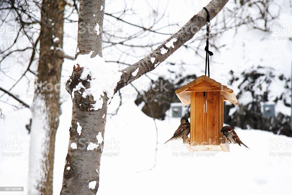 Winter scene with snow and birds stock photo