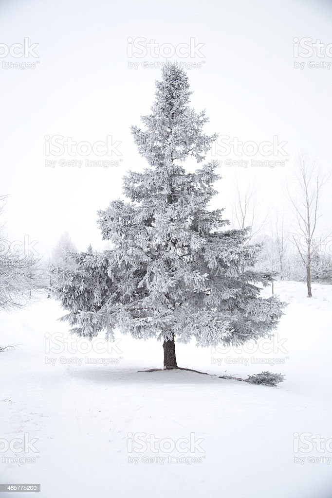 Winter Scene with Snow Covered Trees stock photo
