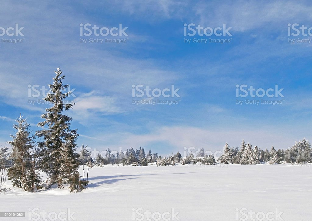 Winter scene with snow in the Black Forest, Germany stock photo
