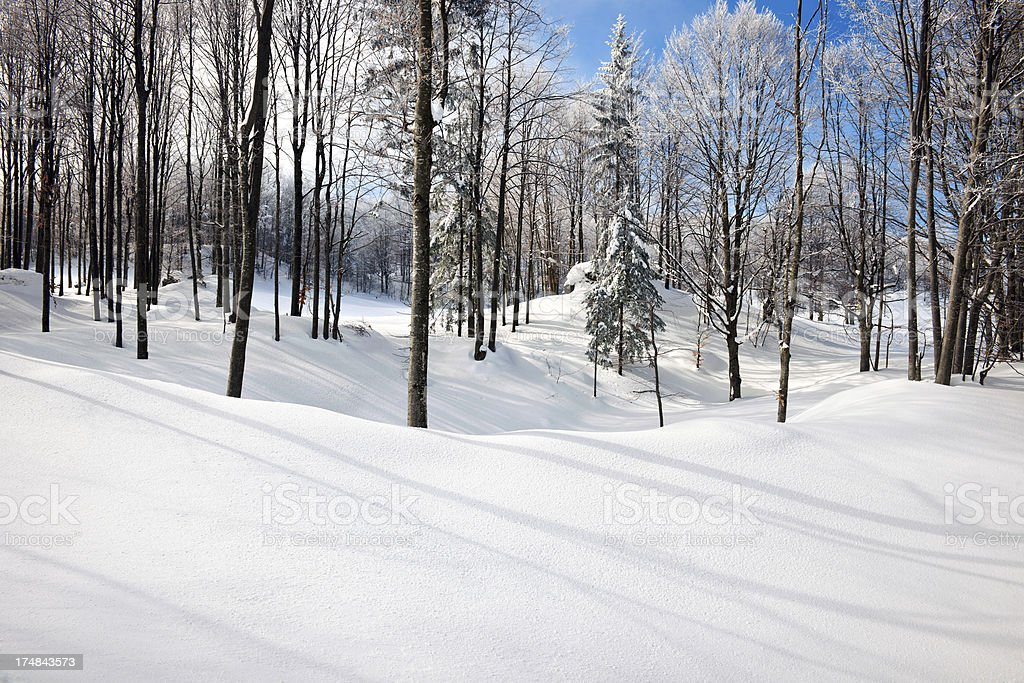 Winter Scene with Trees Primorska Slovenia Europe stock photo