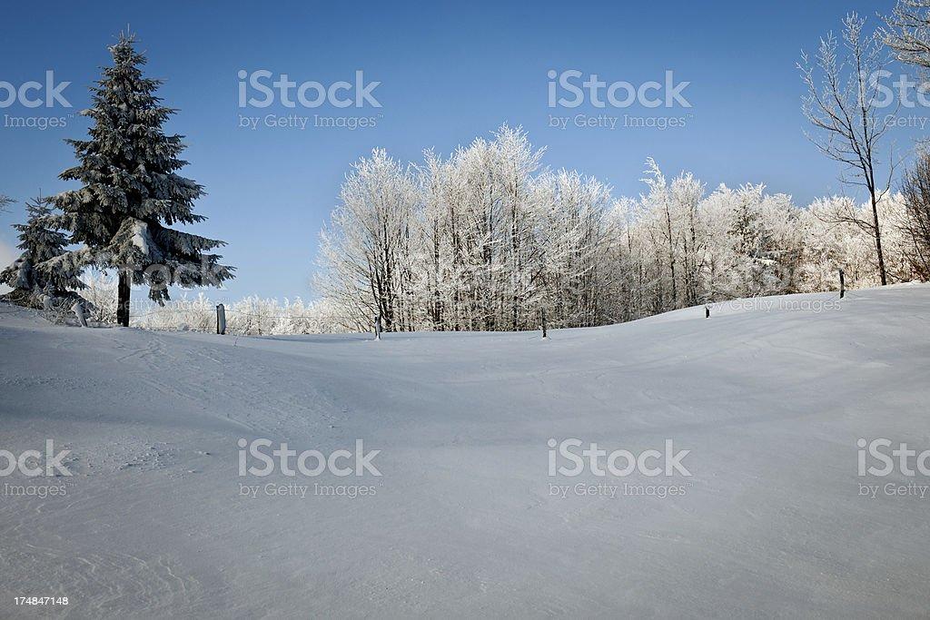 Winter Scene with Trees Primorska Slovenia stock photo