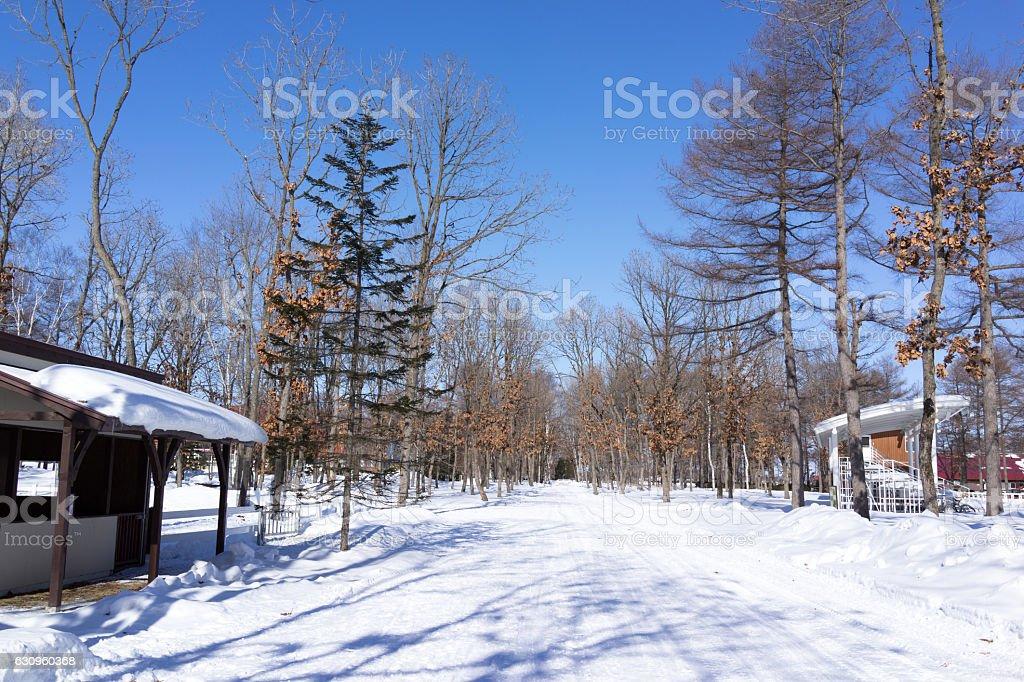 Winter scenery in Hokkaido. 2 stock photo