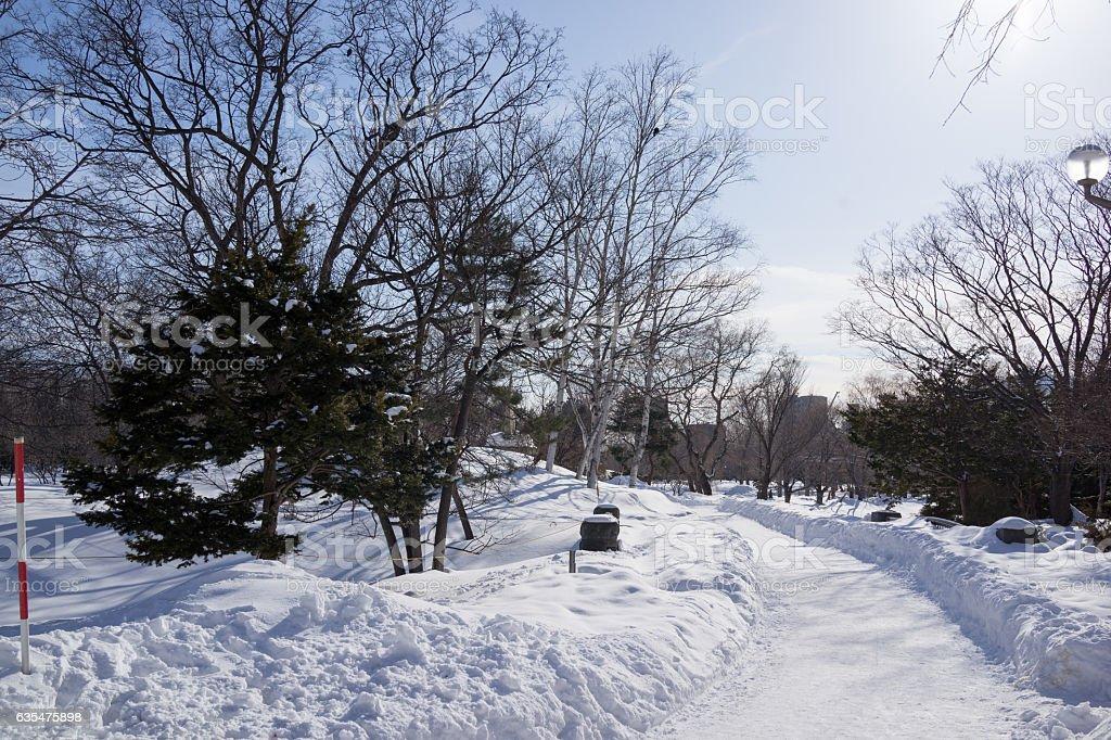Winter scenery in Sapporo city. 3 stock photo
