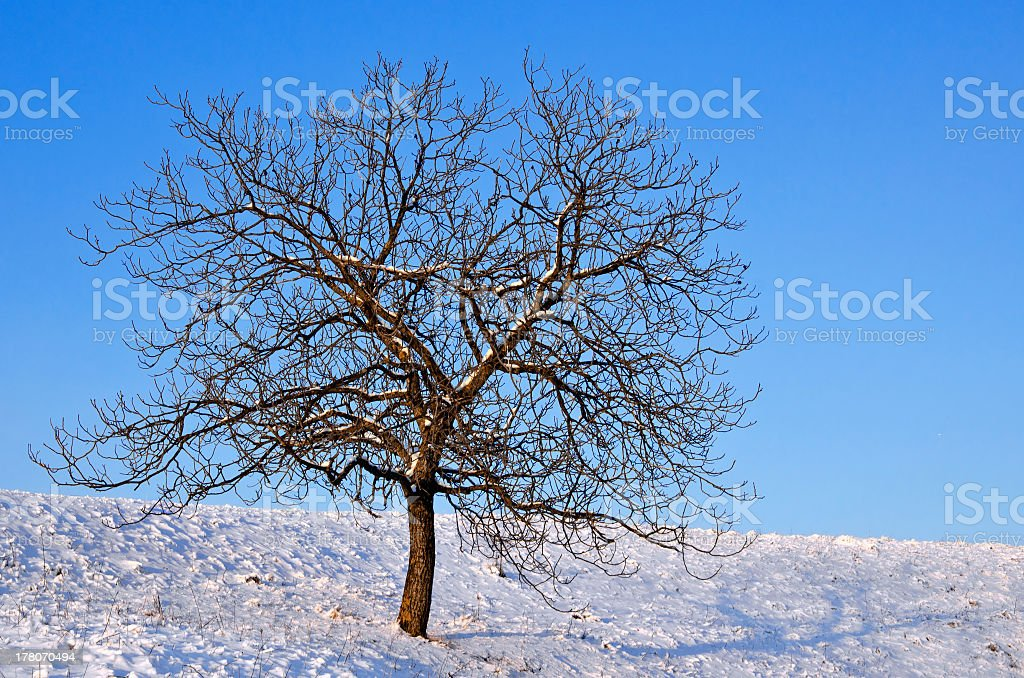 Winter scenery with lonely naked tree on a sunny day stock photo