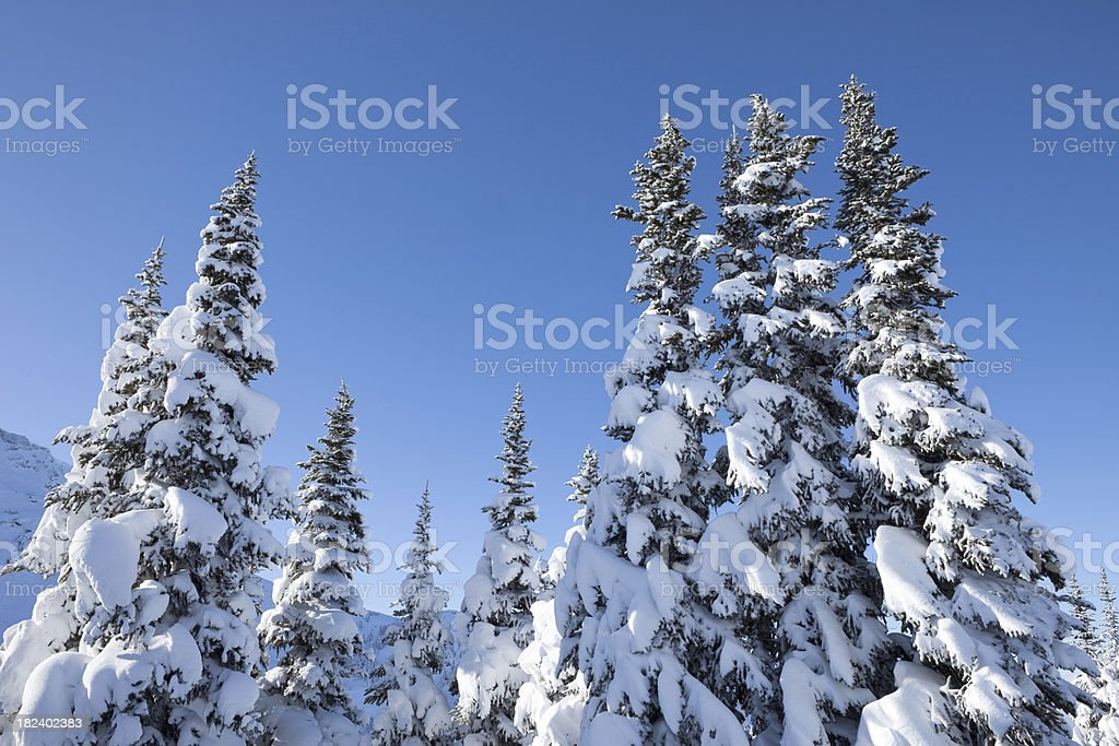 Winter scenic. royalty-free stock photo