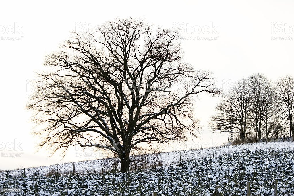 Winter Scenic with a lonely tree royalty-free stock photo