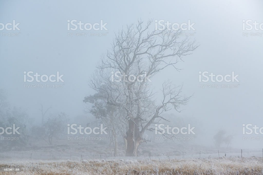 Winter season of leafless trees and dry field in fog stock photo