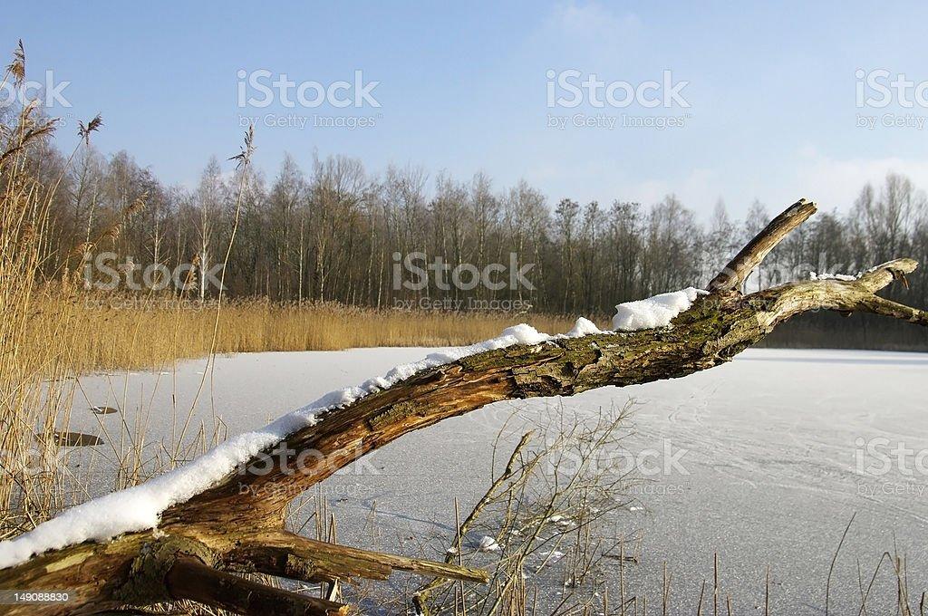Winter setting stock photo