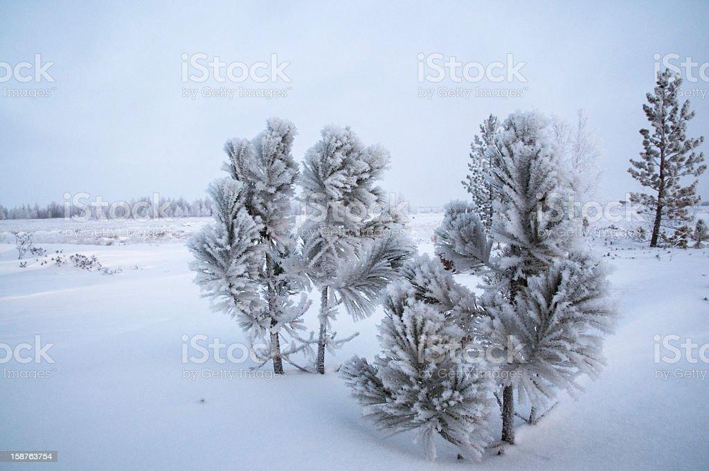 Winter, Siberia. stock photo