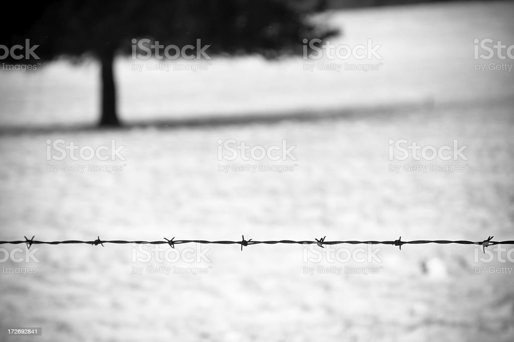 Winter: Simplicity royalty-free stock photo