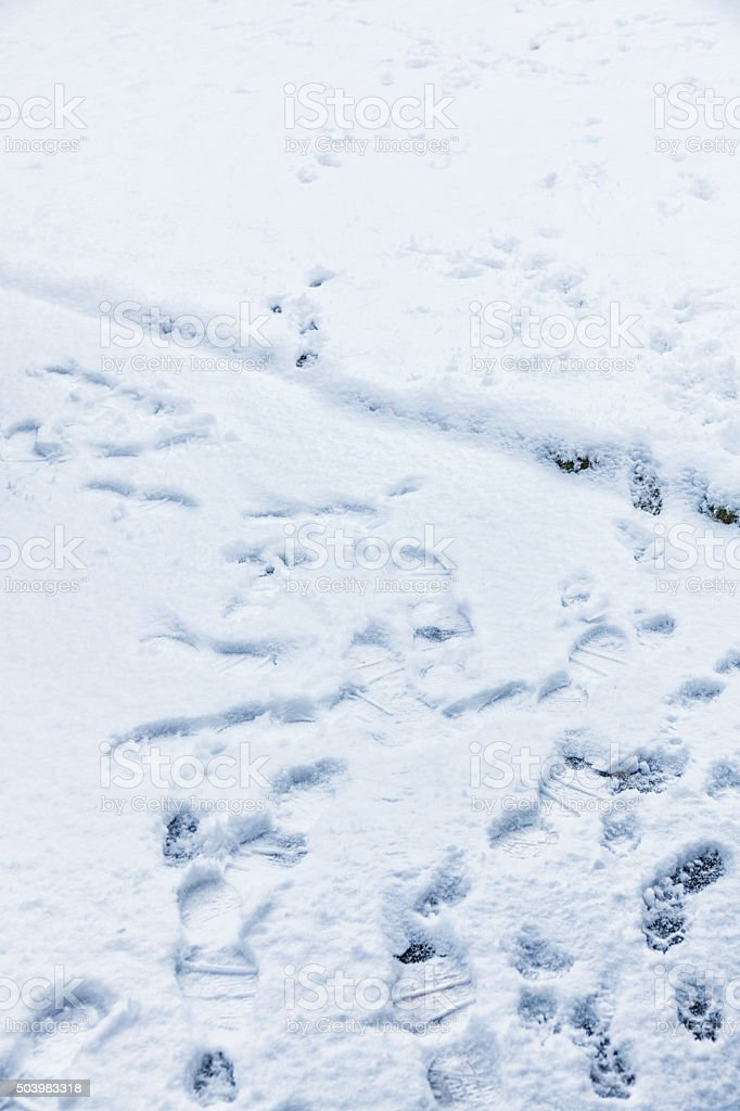 Winter Snow Boot Footprints And Dog Paw Print Tracks stock photo