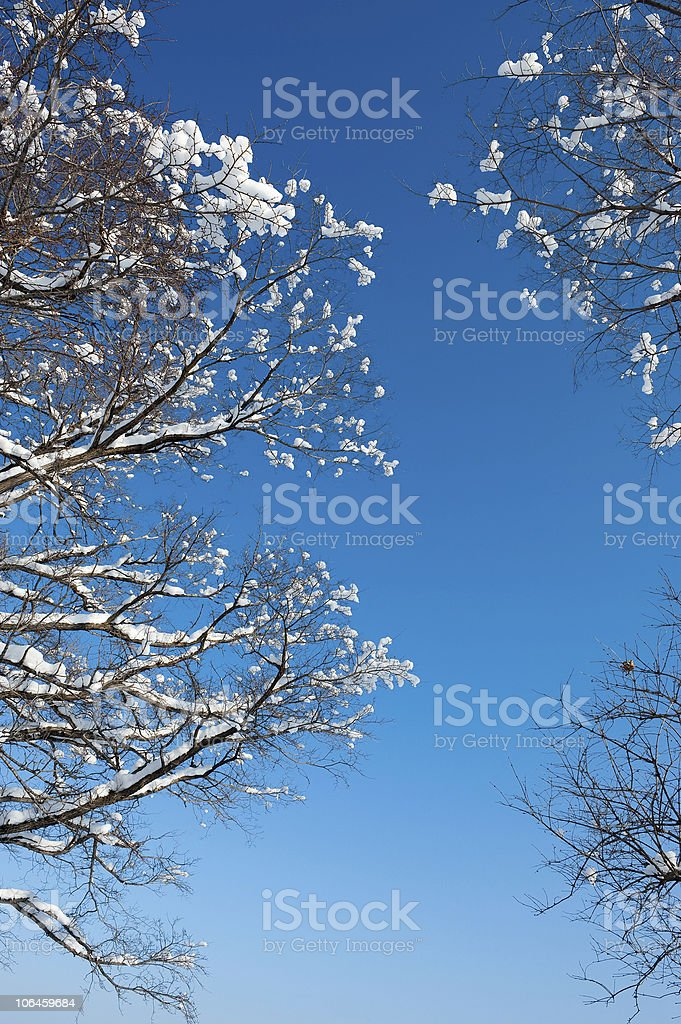 winter snow branches of tree against blue sky stock photo