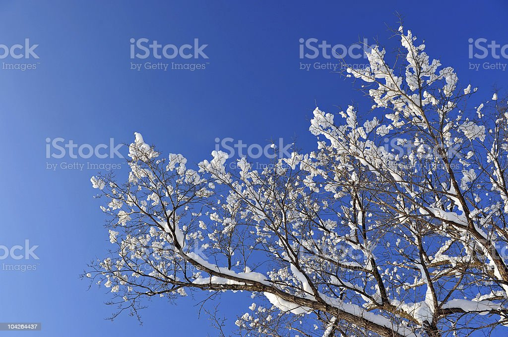 winter snow branches of tree stock photo