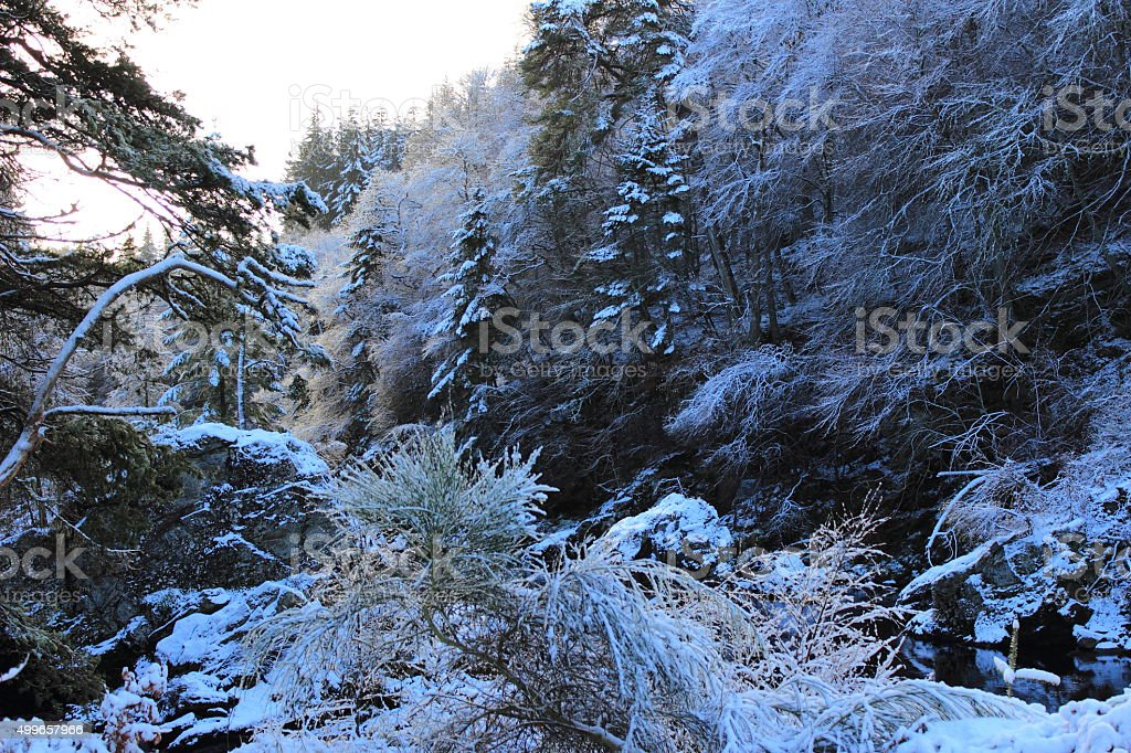 Winter Snow Covered Forest stock photo