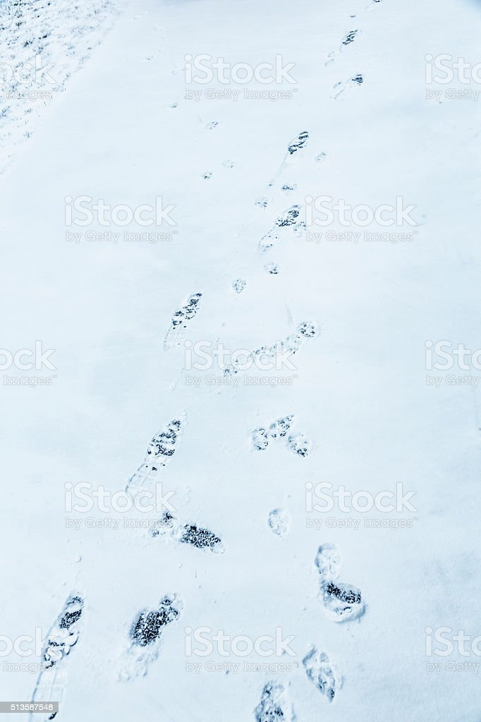 Winter Snow Exercise Footprints And Dog Paw Prints stock photo