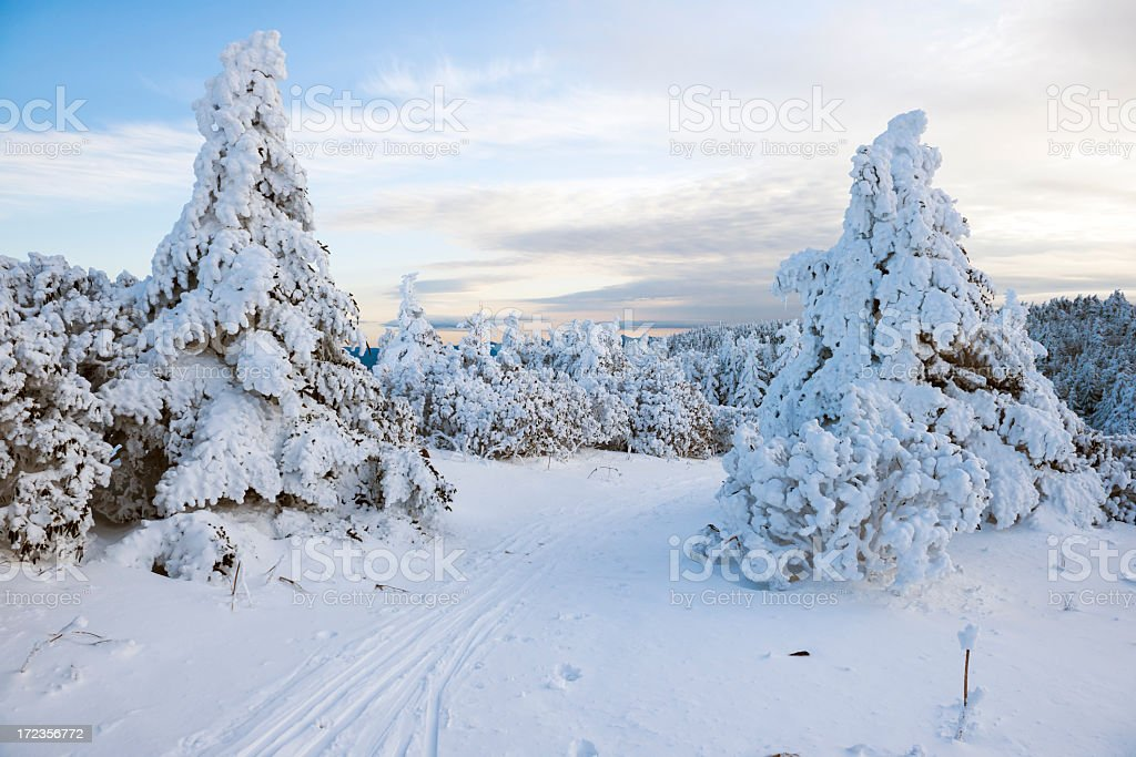 Winter snow forest landscape on Roan Mountain royalty-free stock photo