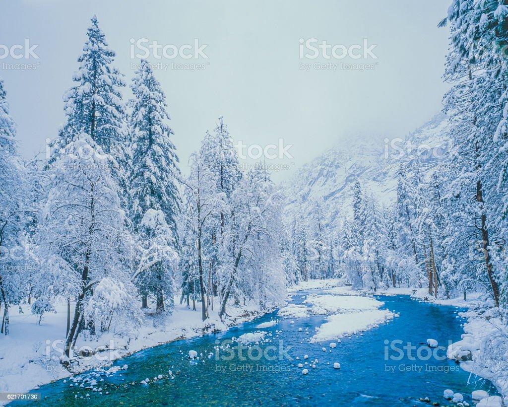 Winter Snow in Yosemite N.P. (P) stock photo