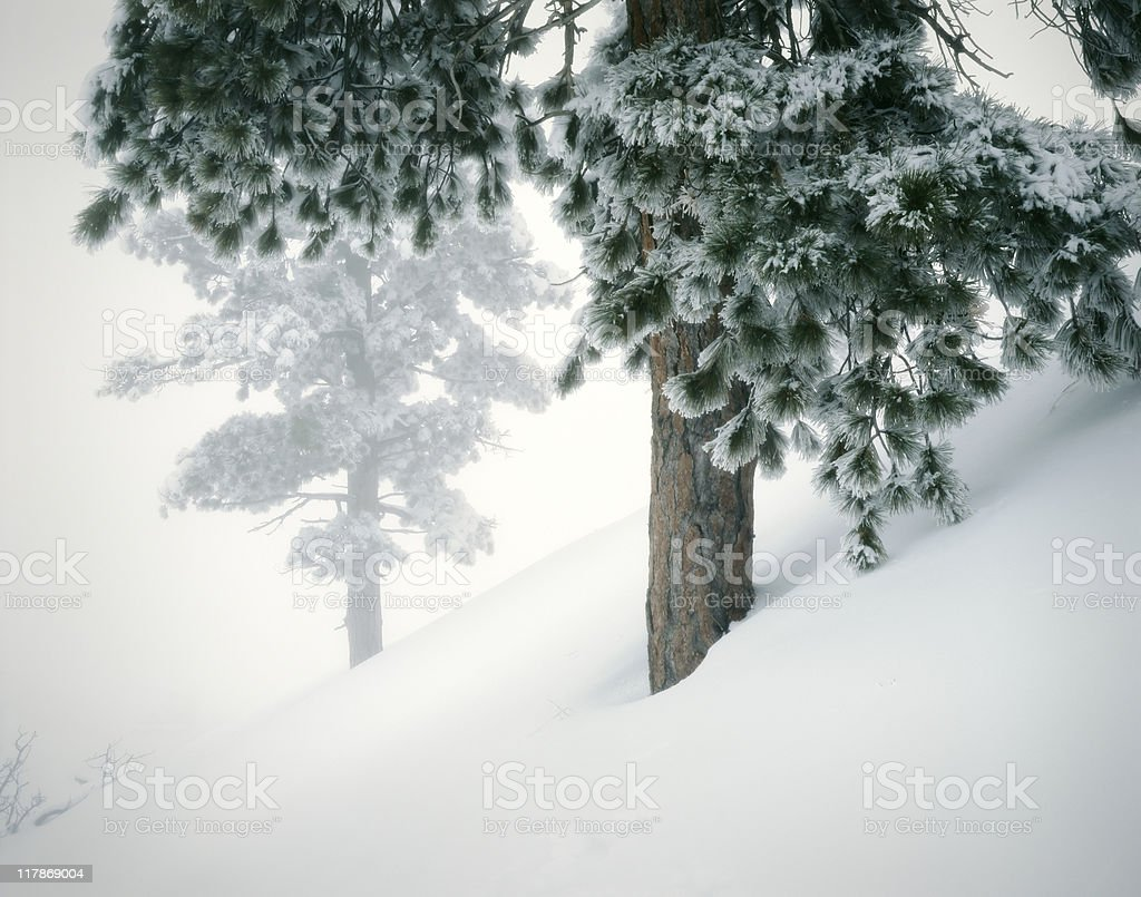 Winter Snow Landscape with Evergreens royalty-free stock photo