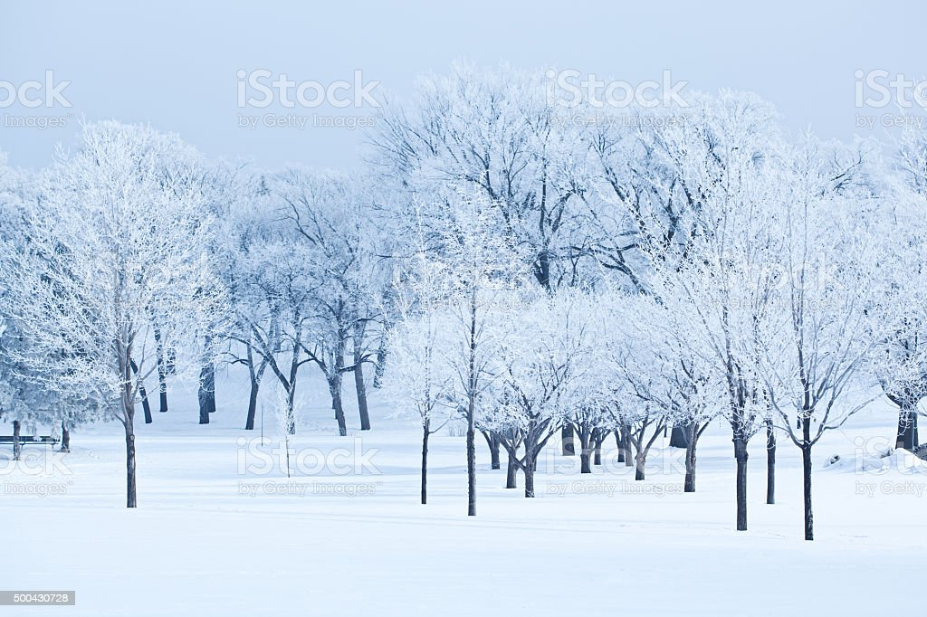 Winter Snow Landscape with Trees and Forest Nature stock photo