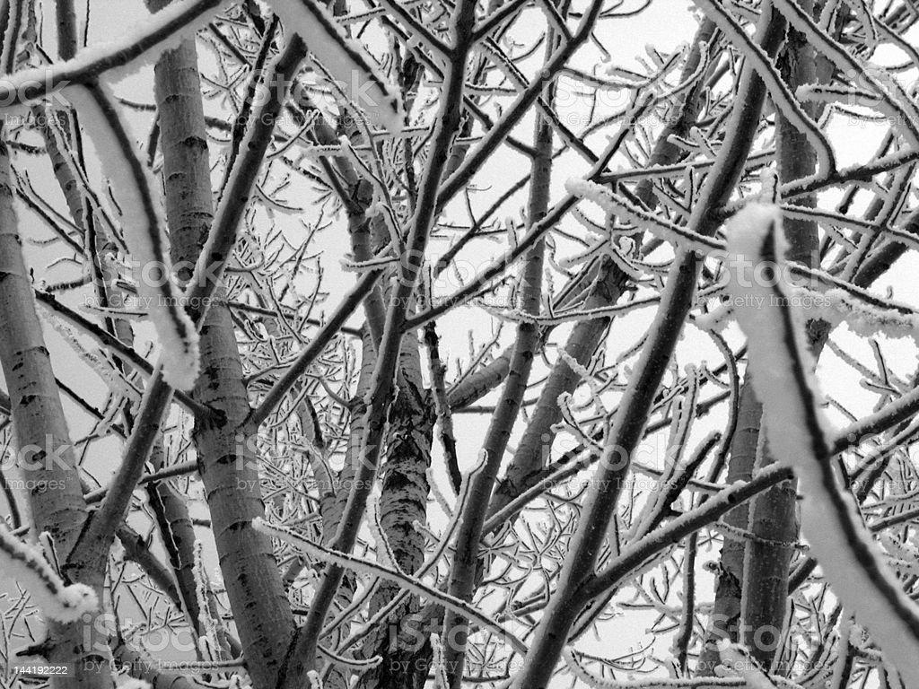 Winter Snow on Trees stock photo