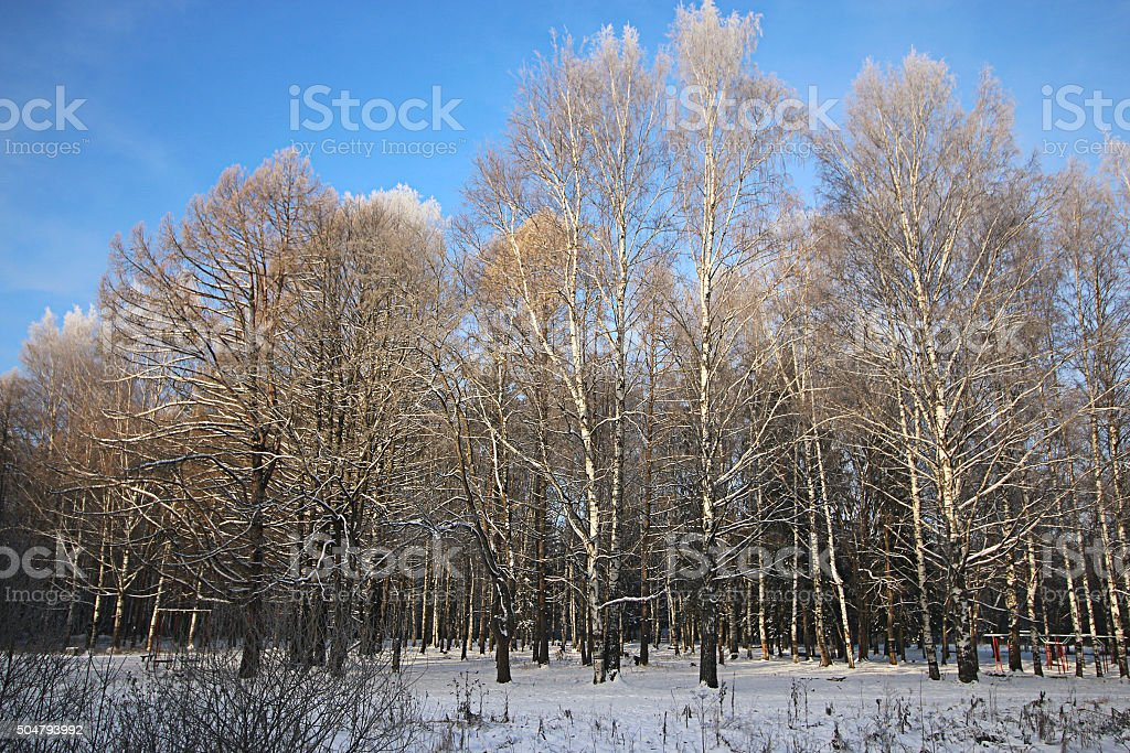 Winter snow park forest stock photo