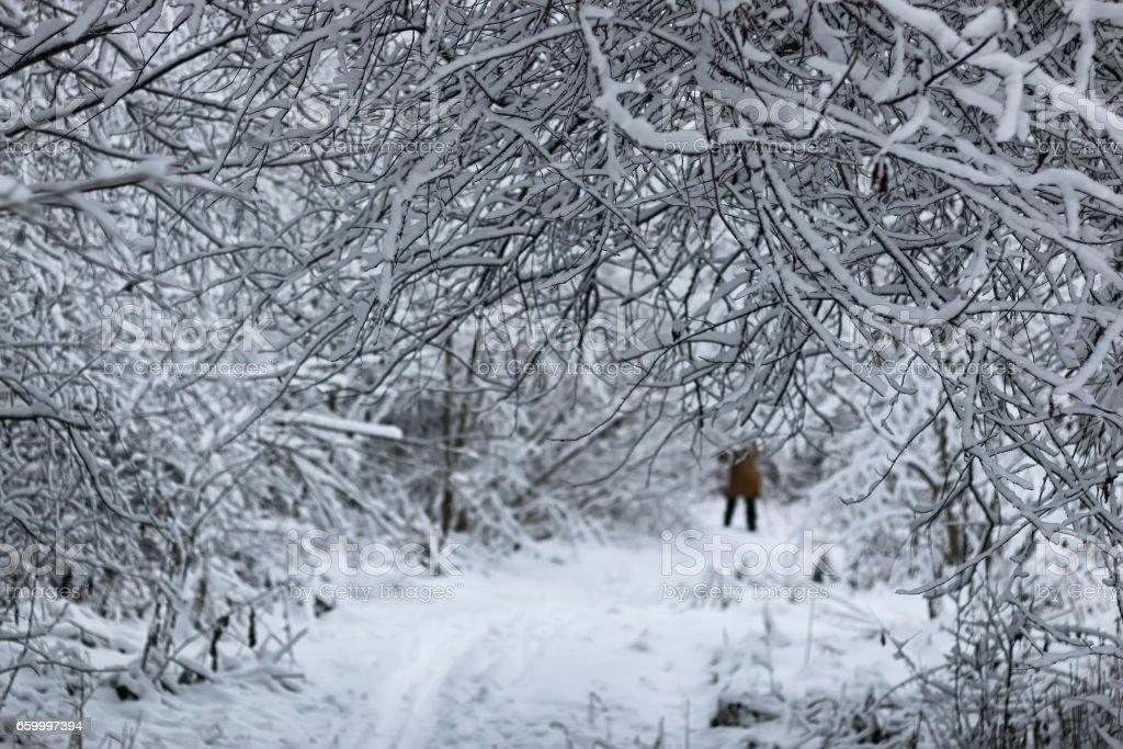 winter snow sport man run in tree park stock photo