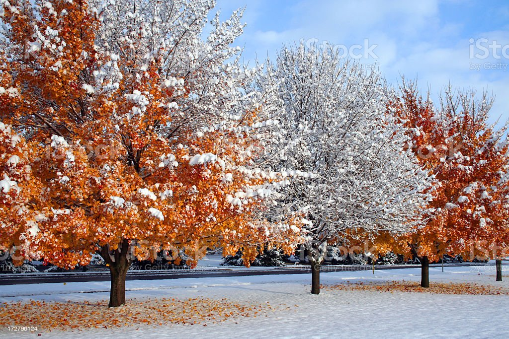 Winter snow with three trees in a row royalty-free stock photo
