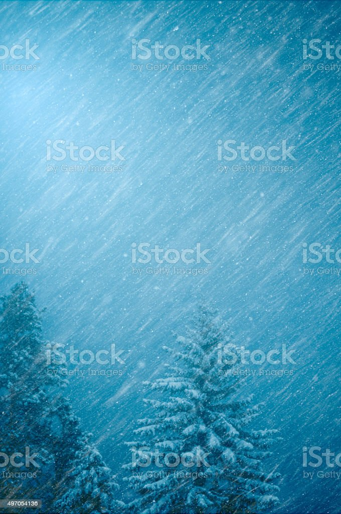 Winter Snowstorm in A Forest - Blue Nature Background stock photo