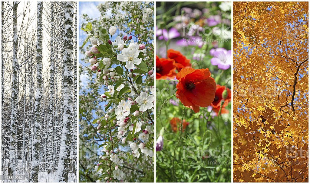 Winter, spring, summer, autumn. Four seasons. stock photo
