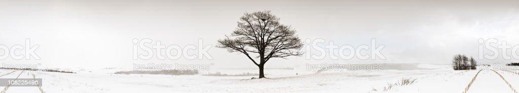 Winter Squalls royalty-free stock photo
