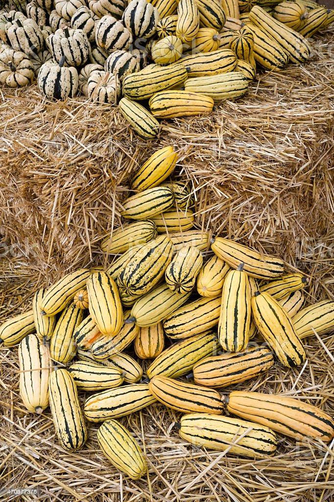 Winter Squash Farmer's Market Agricultural Fair stock photo