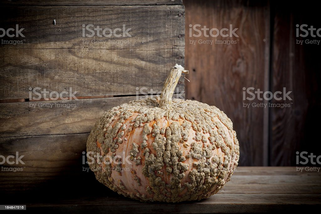 Winter Squash on display weathered wood surface royalty-free stock photo