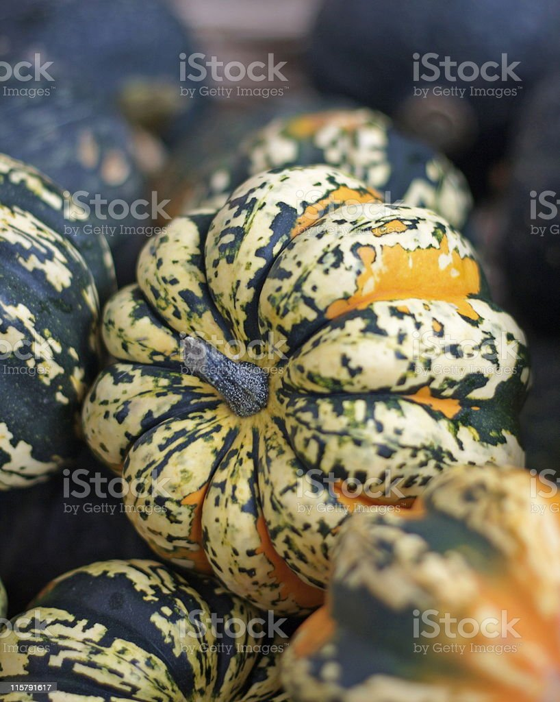 Winter squash royalty-free stock photo