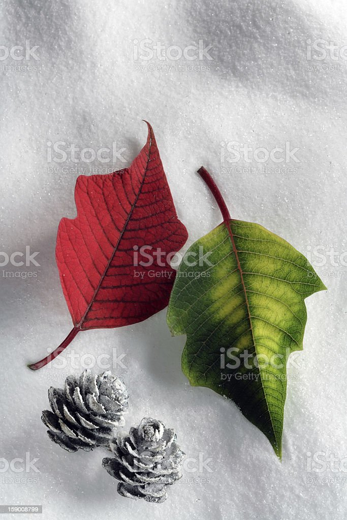 Winter still with poinsettia  leaves royalty-free stock photo