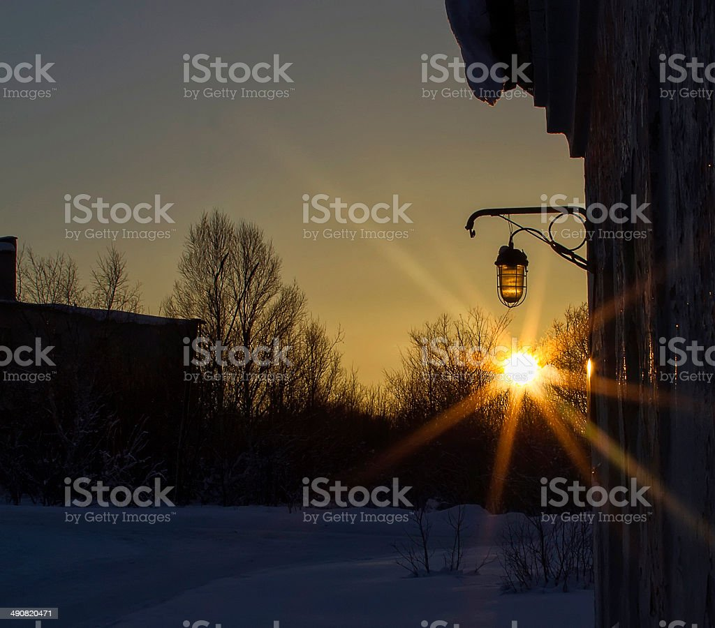 Winter sun filtered through the trees royalty-free stock photo