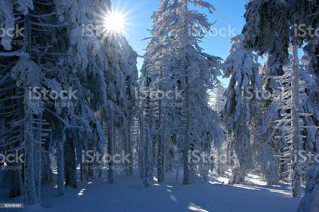 Winter Sun IV royalty-free stock photo
