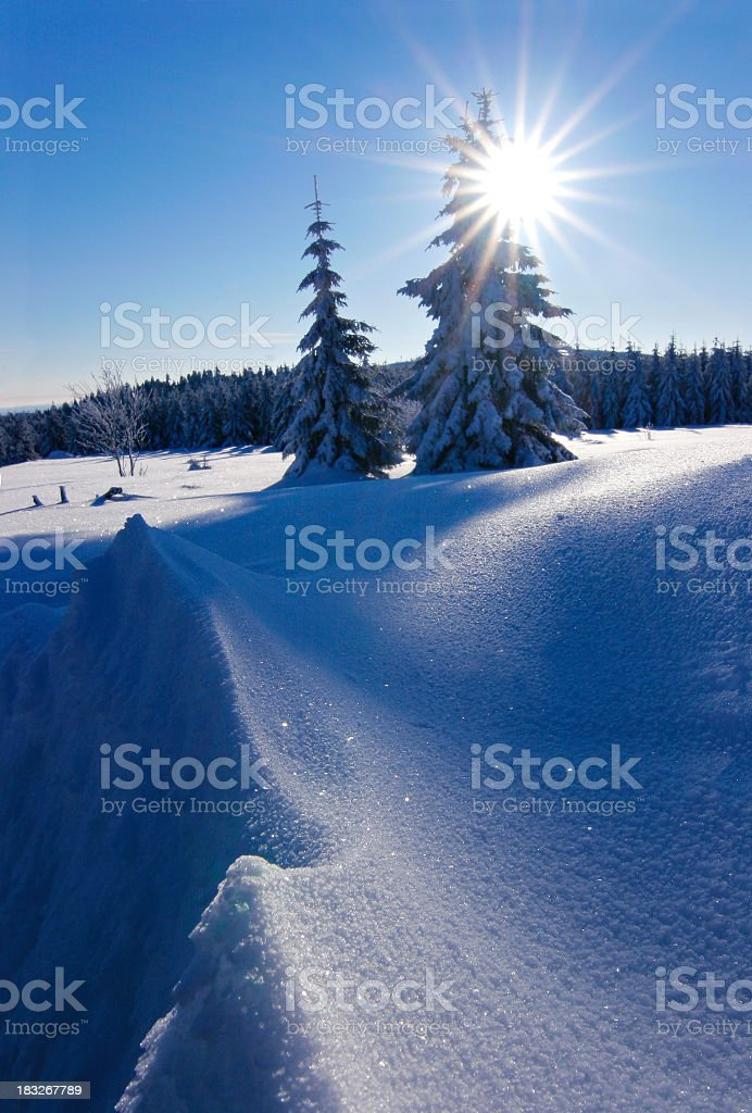 Winter Sun royalty-free stock photo