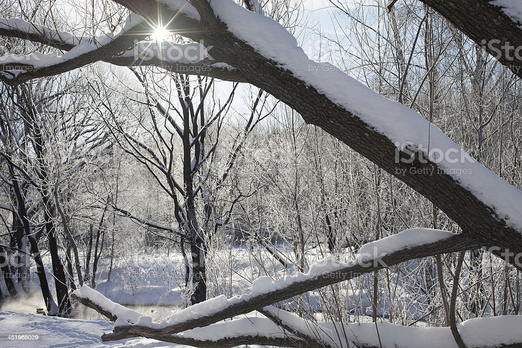 Winter sun. royalty-free stock photo