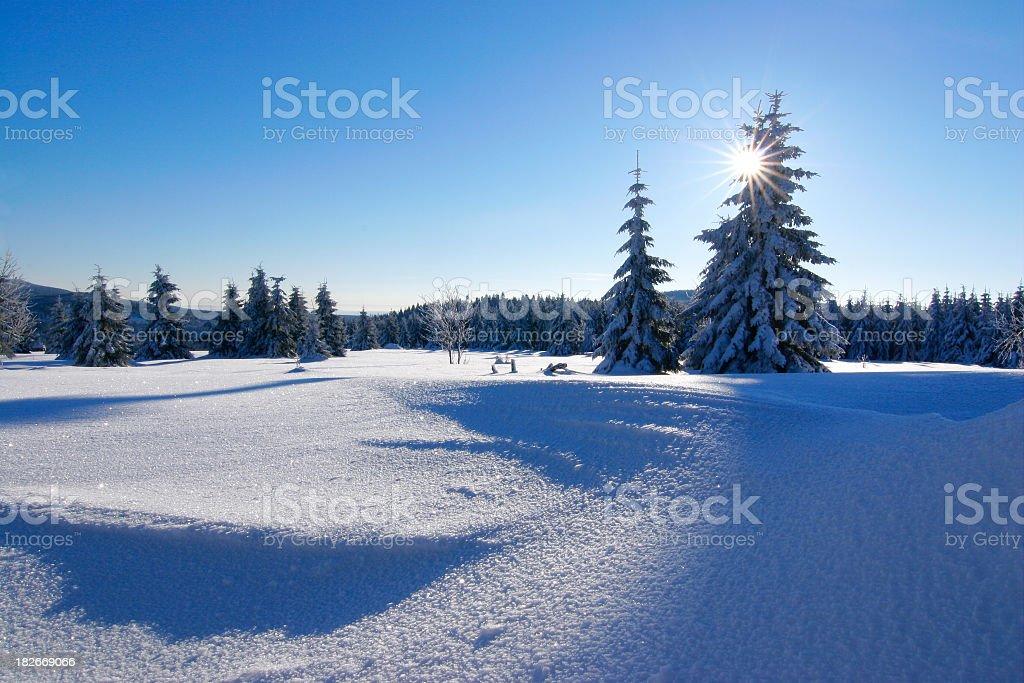 Winter Sun V royalty-free stock photo