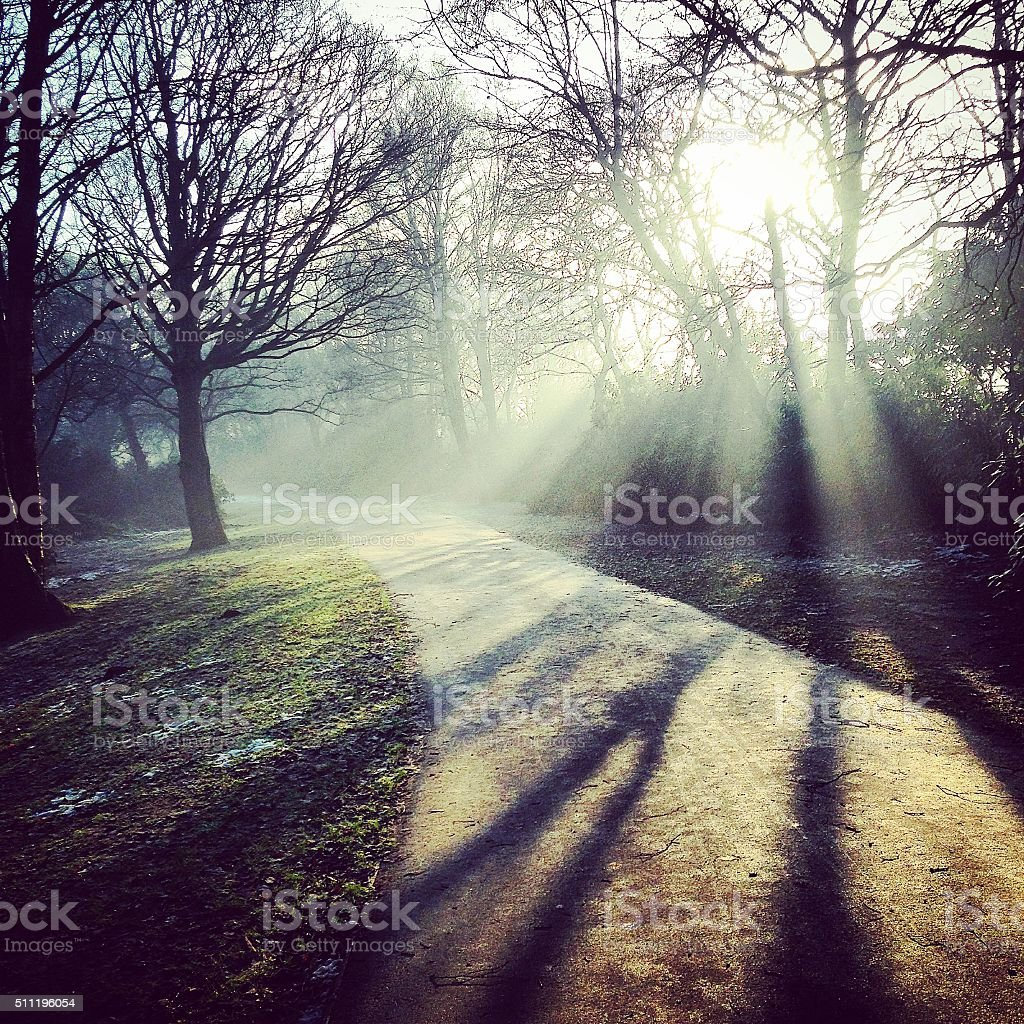 Winter sunlight in the park stock photo