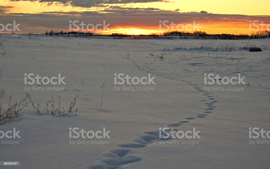 Winter Sunrise and Coyote Tracks royalty-free stock photo