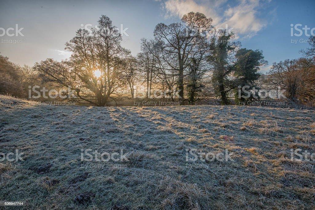 Winter sunrise stock photo