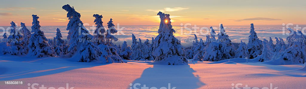 Winter Sunrise, snow covered forest on mountain above the clouds royalty-free stock photo