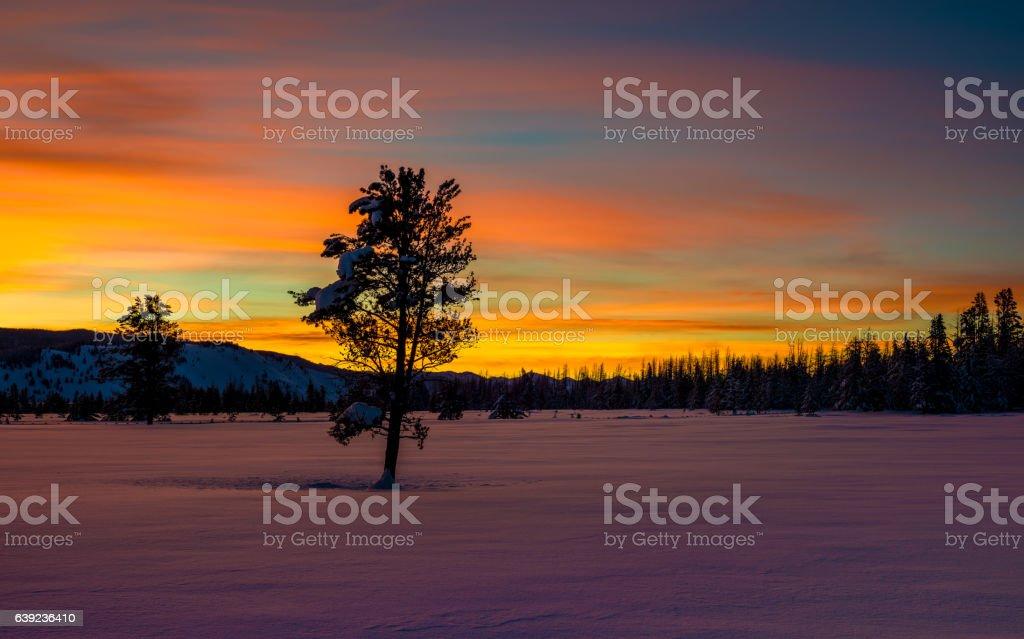 Winter sunrise with lone tree and orange sky stock photo